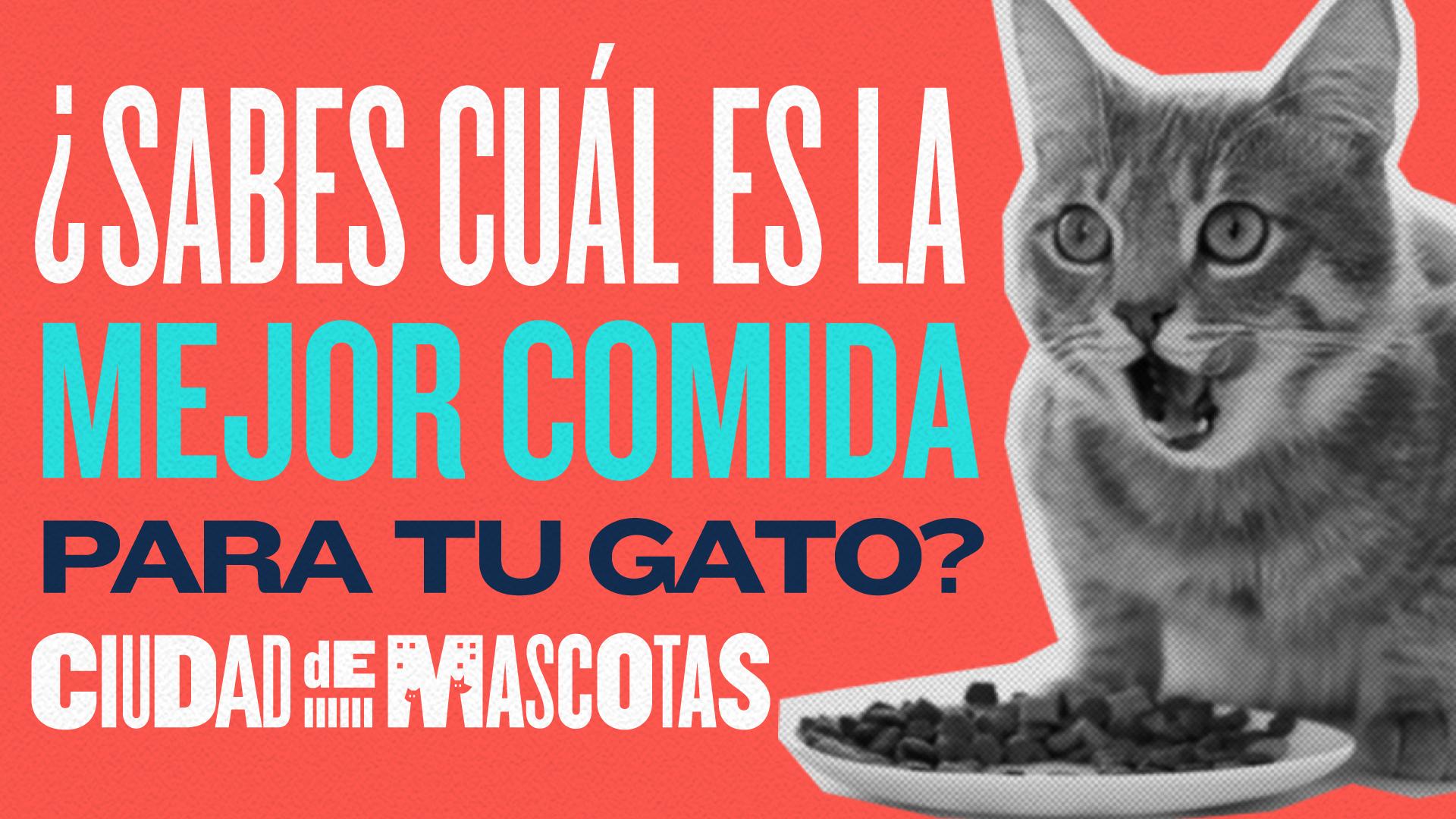 Cuál Es La Mejor Comida Para Gatos Ciudaddemascotas Com