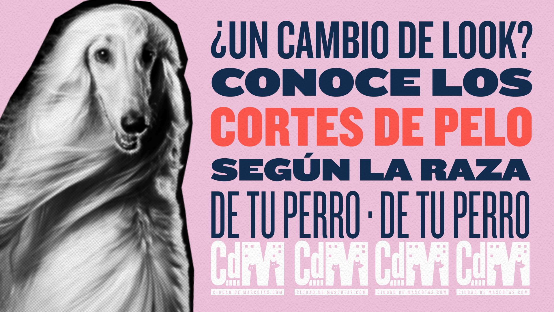 Cortes según la raza de tu perro - Ciudaddemascotas.com
