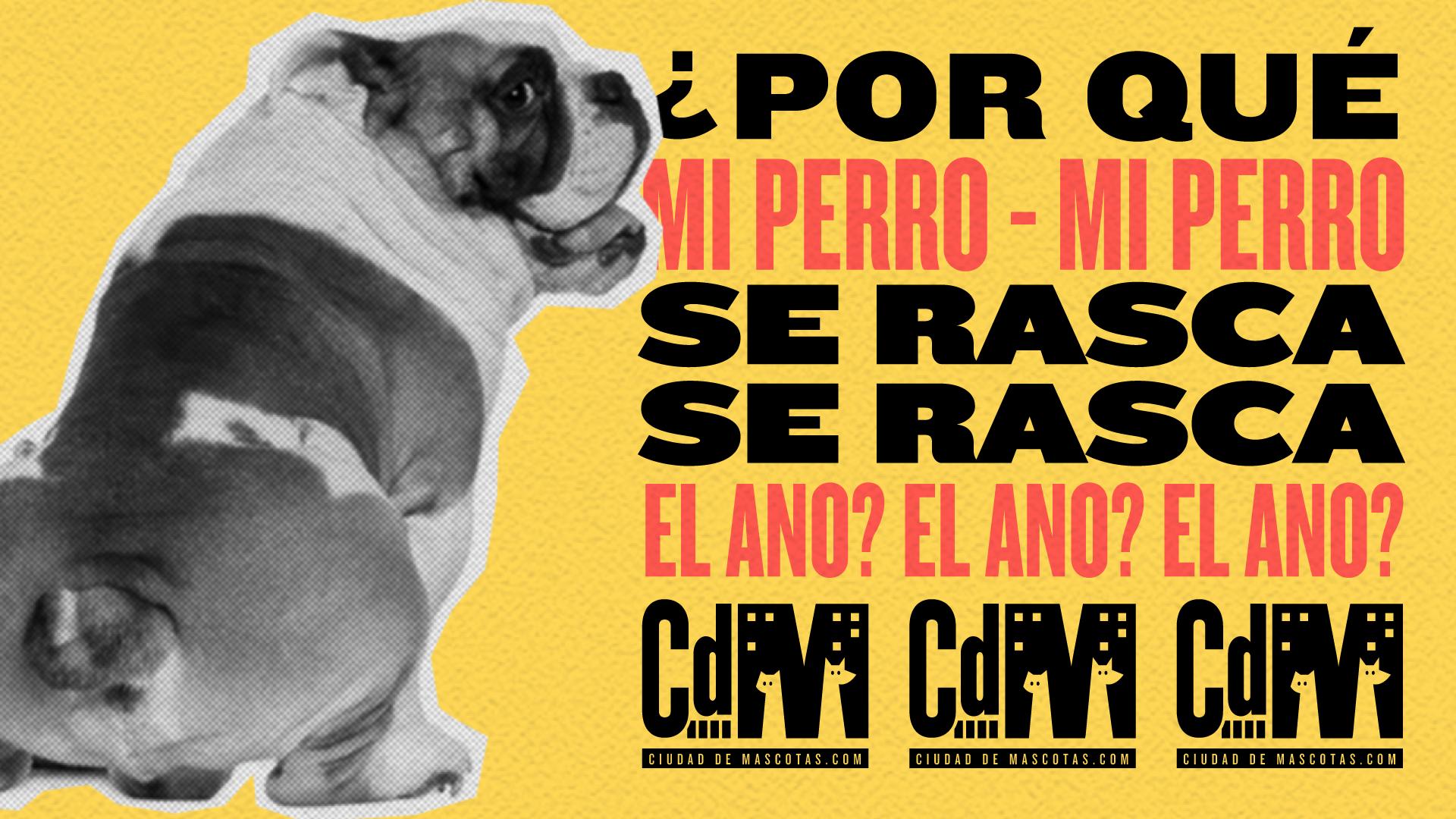 ¿Por qué mi perro se rasca el ano? Ciudaddemascotas.com