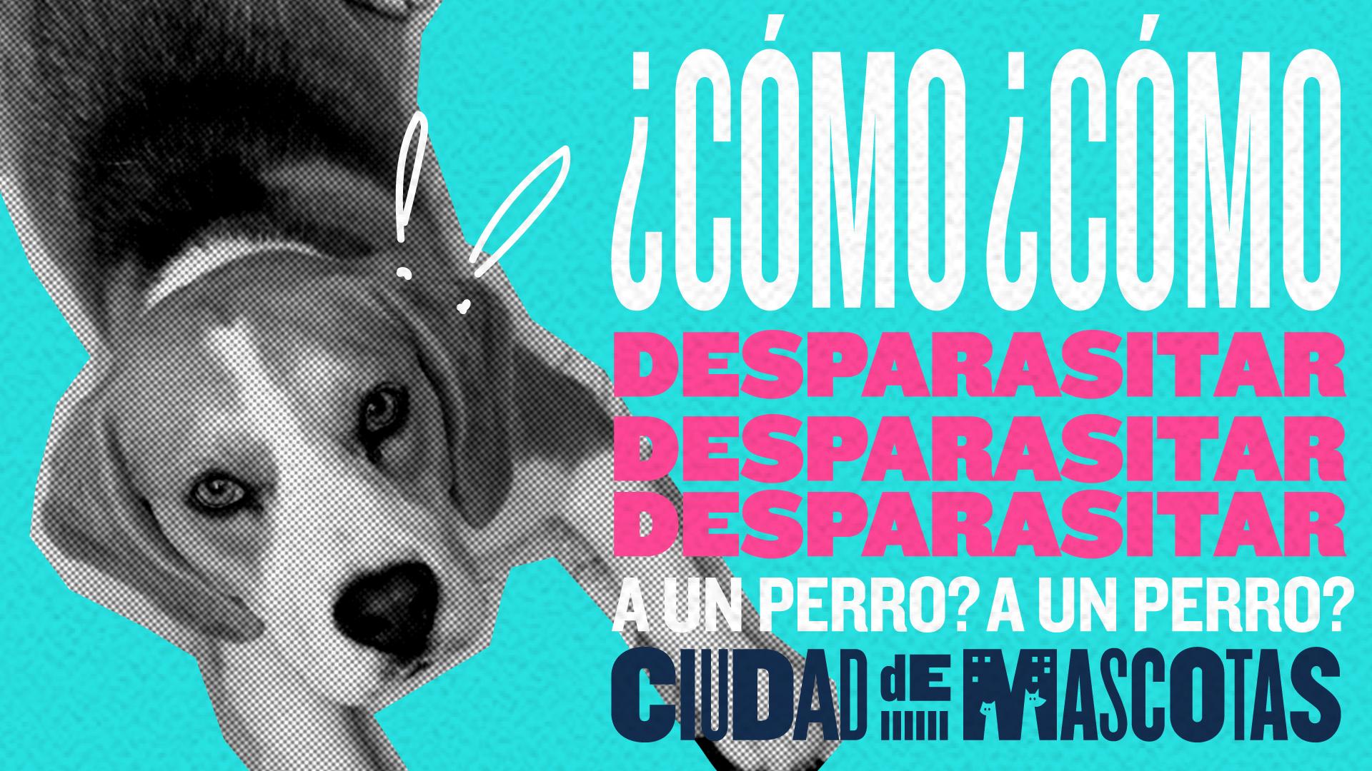 Cómo desparasitar a un perro - Ciudaddemascotas.com