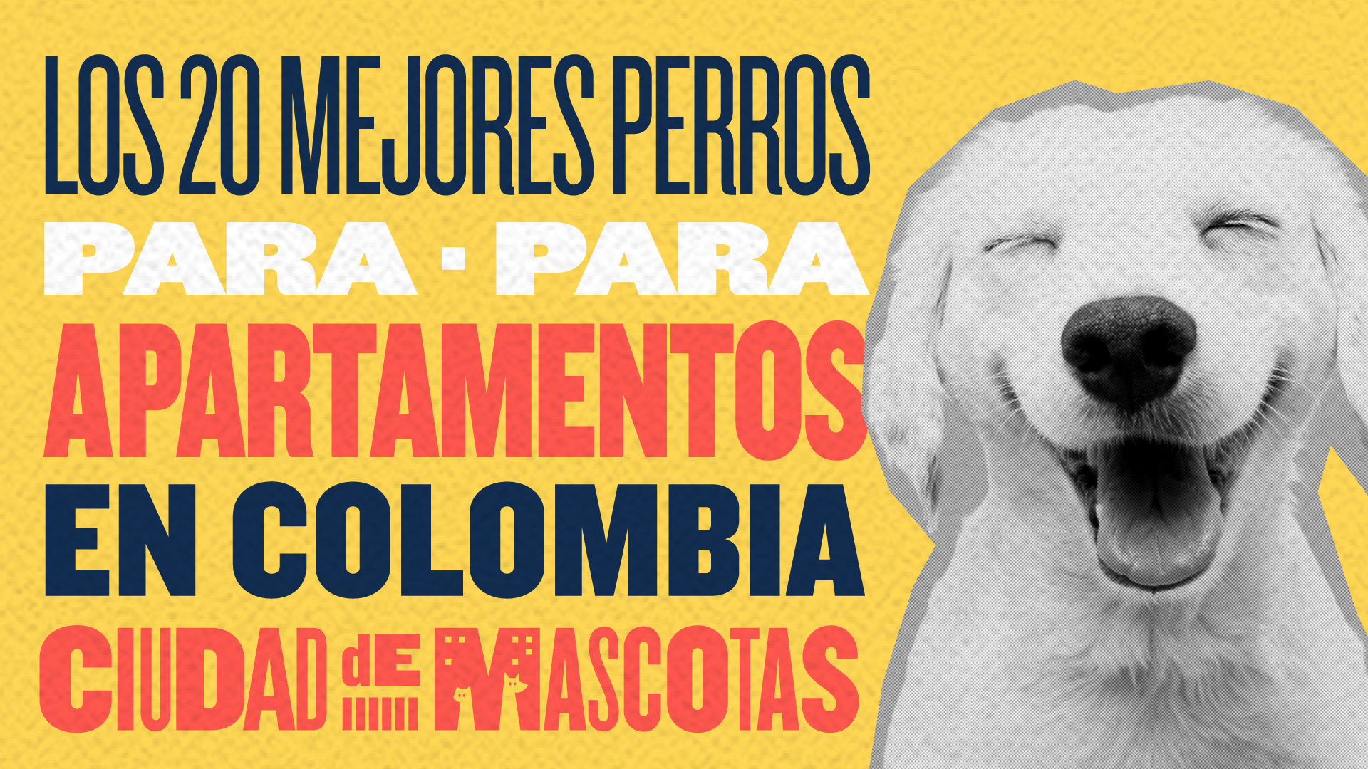Los 20 mejores perros para apartamentos en Colombia - Ciudaddemascotas.com