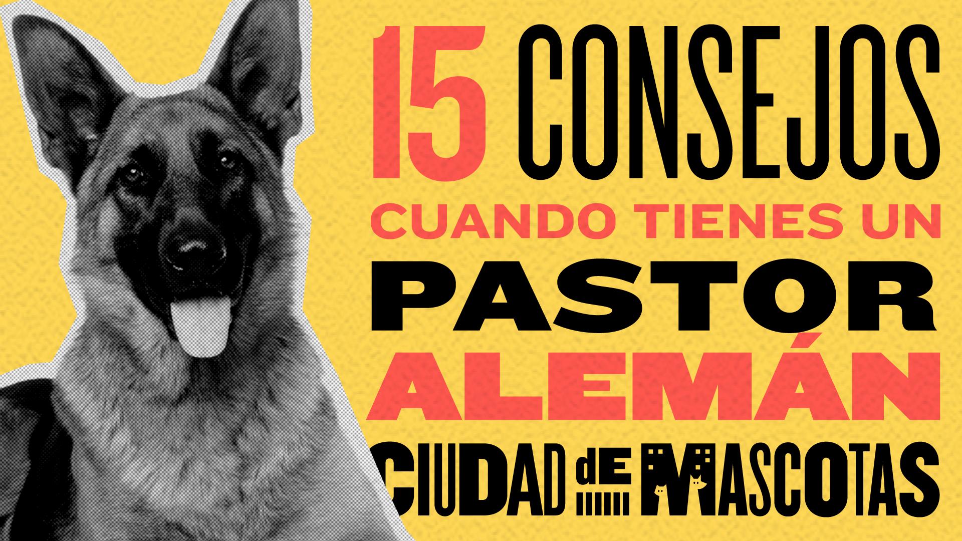 15 consejos cuando tienes un Pastor Alemán