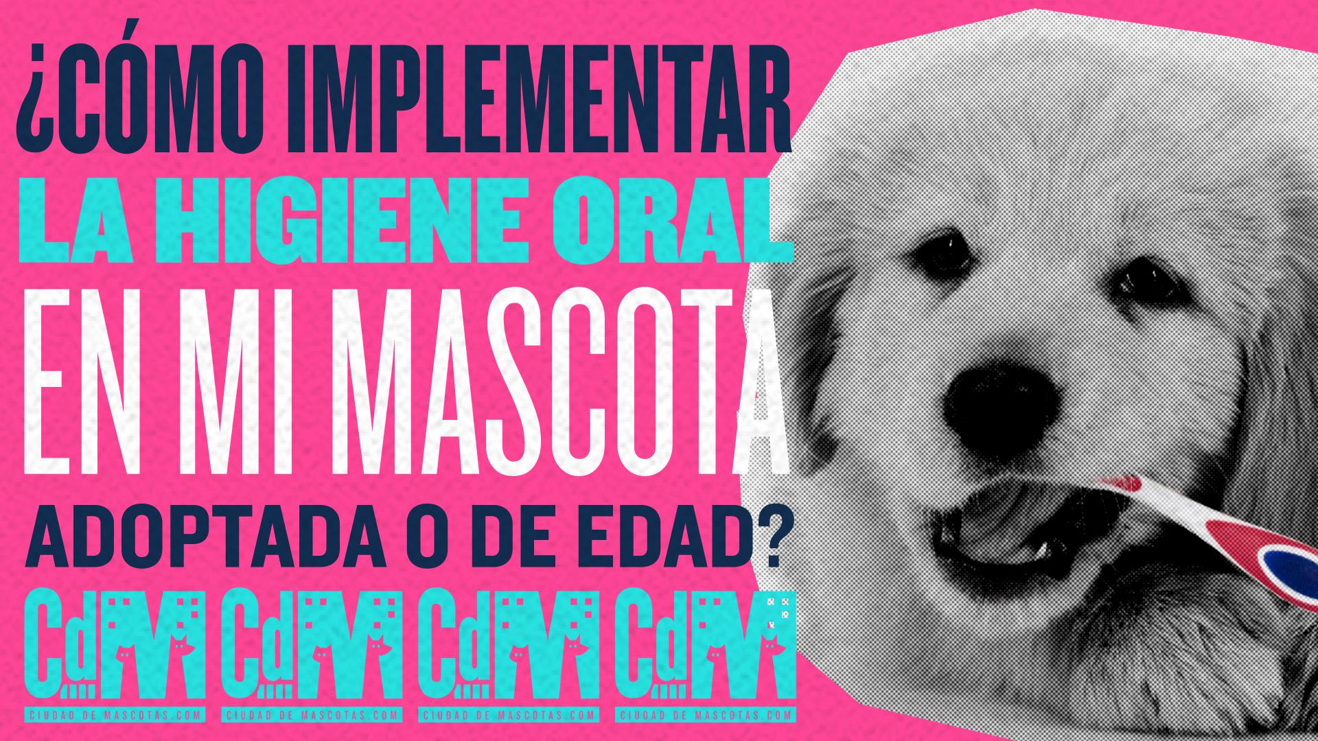 ¿Cómo implementar la higiene oral en mi mascota adoptada o de edad?