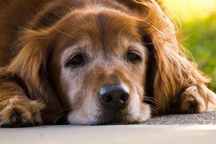 Tumores en perro: todo lo que debes saber