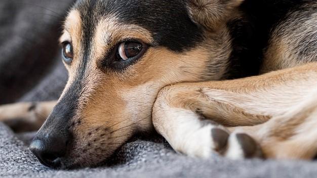 Parásitos en perros, un peligro diminuto - Datos de interés