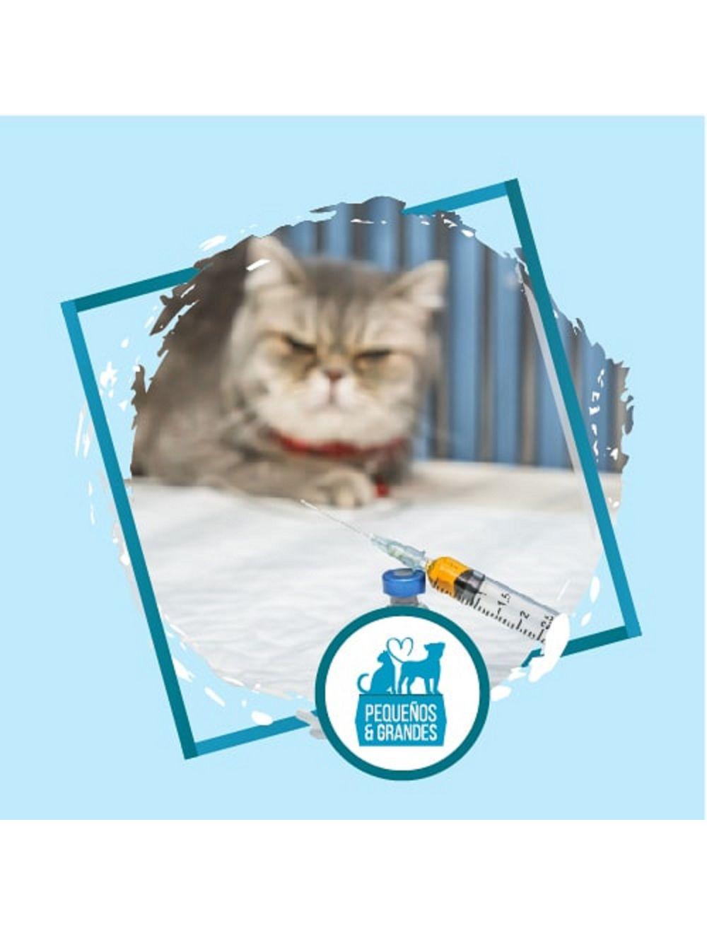 Vacunación a domicilio Gato - Antirábica y leucémica