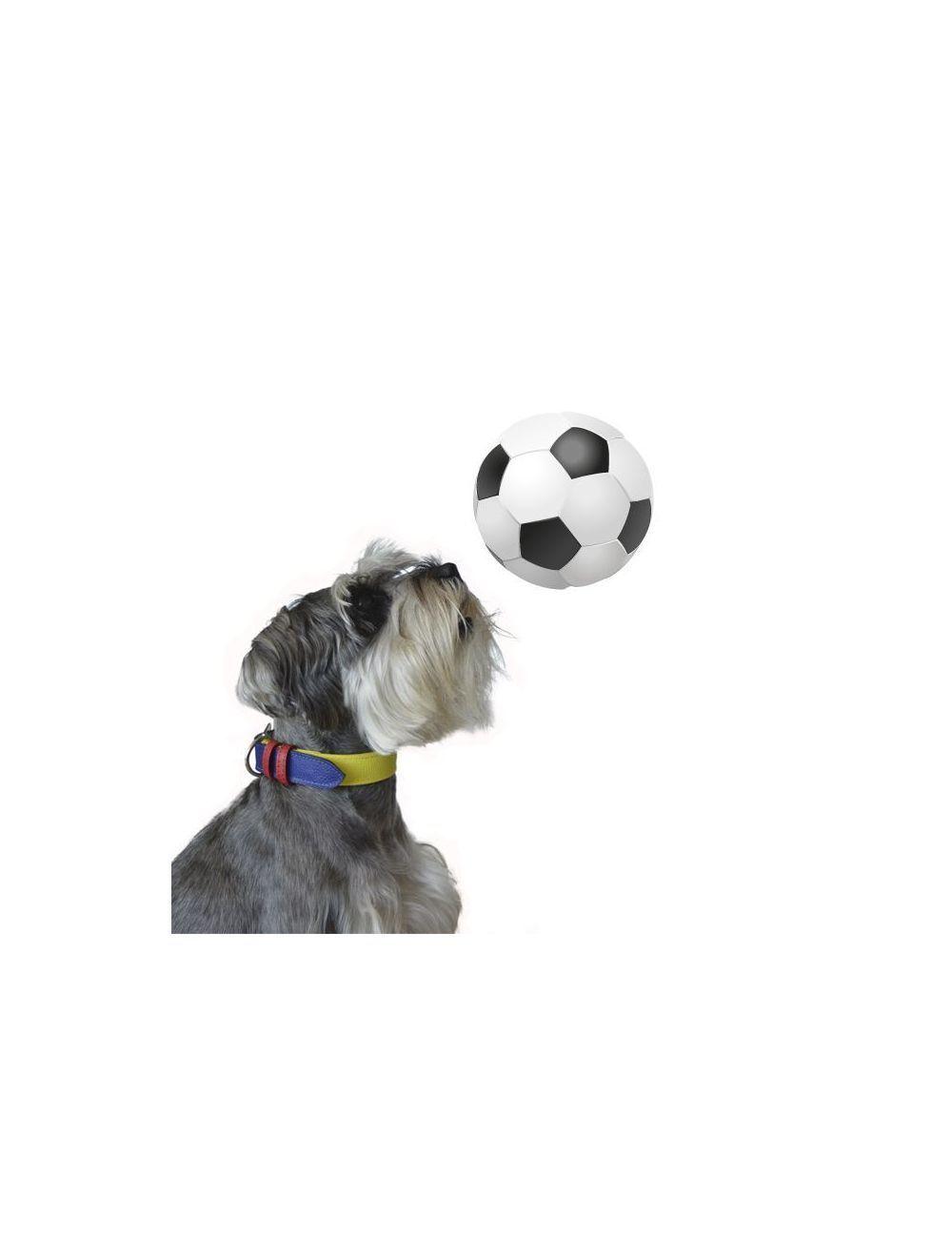Collar para perros CDM edicion copa america-ciudaddemascotas.com