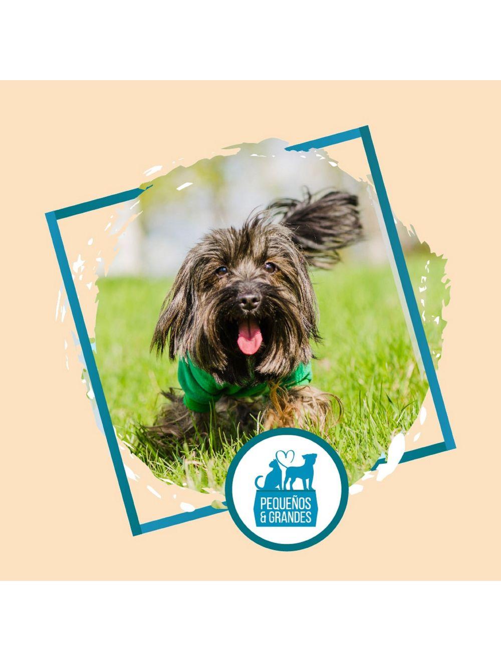 Guardería Canina Familiar Tipo Hotel–Fin de Semana