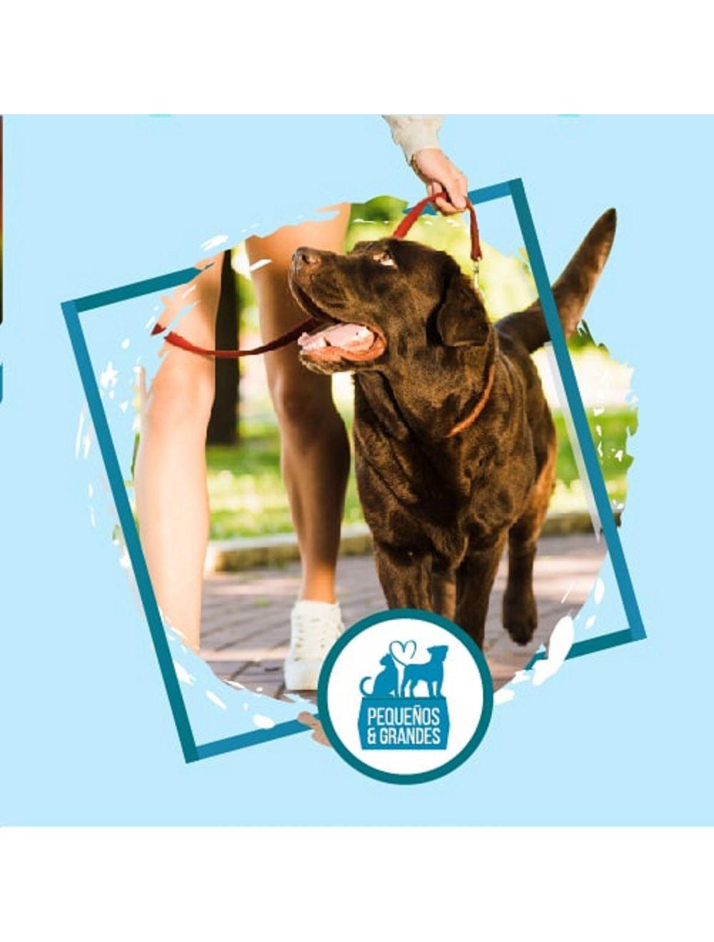 Guardería Canina Campestre Tipo Hotel–30 días 29 noches
