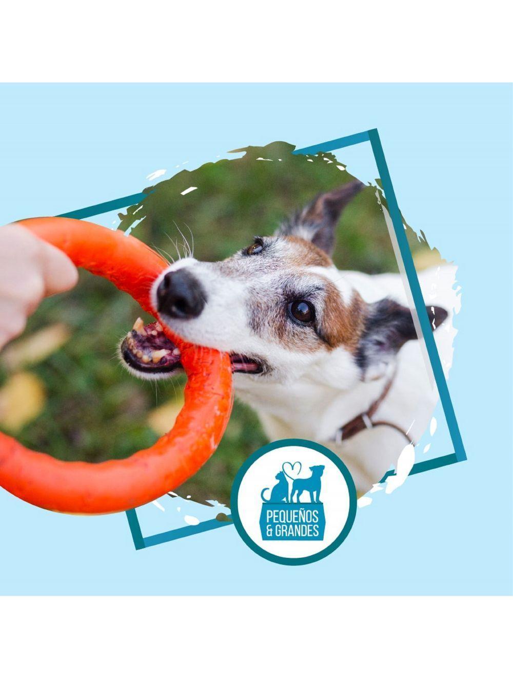 Guardería canina campestre tipo hotel–Puente festivo