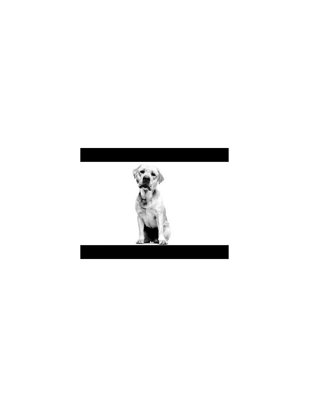 Royal canin breed health nutrition golden retriever 13.6 kg