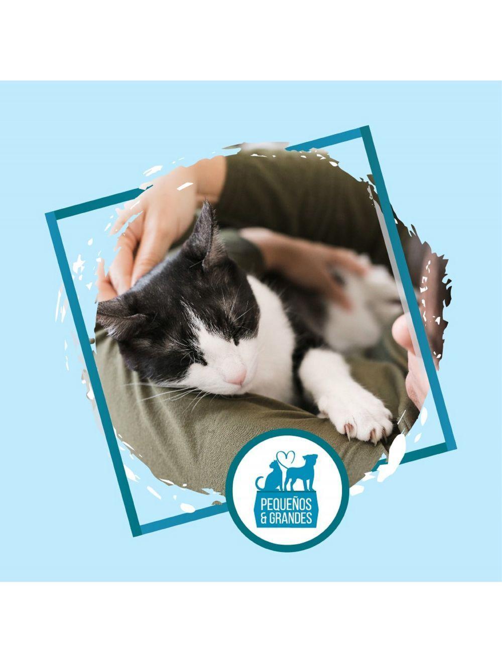 Niñera Felina - Sesión para 2 Gatos