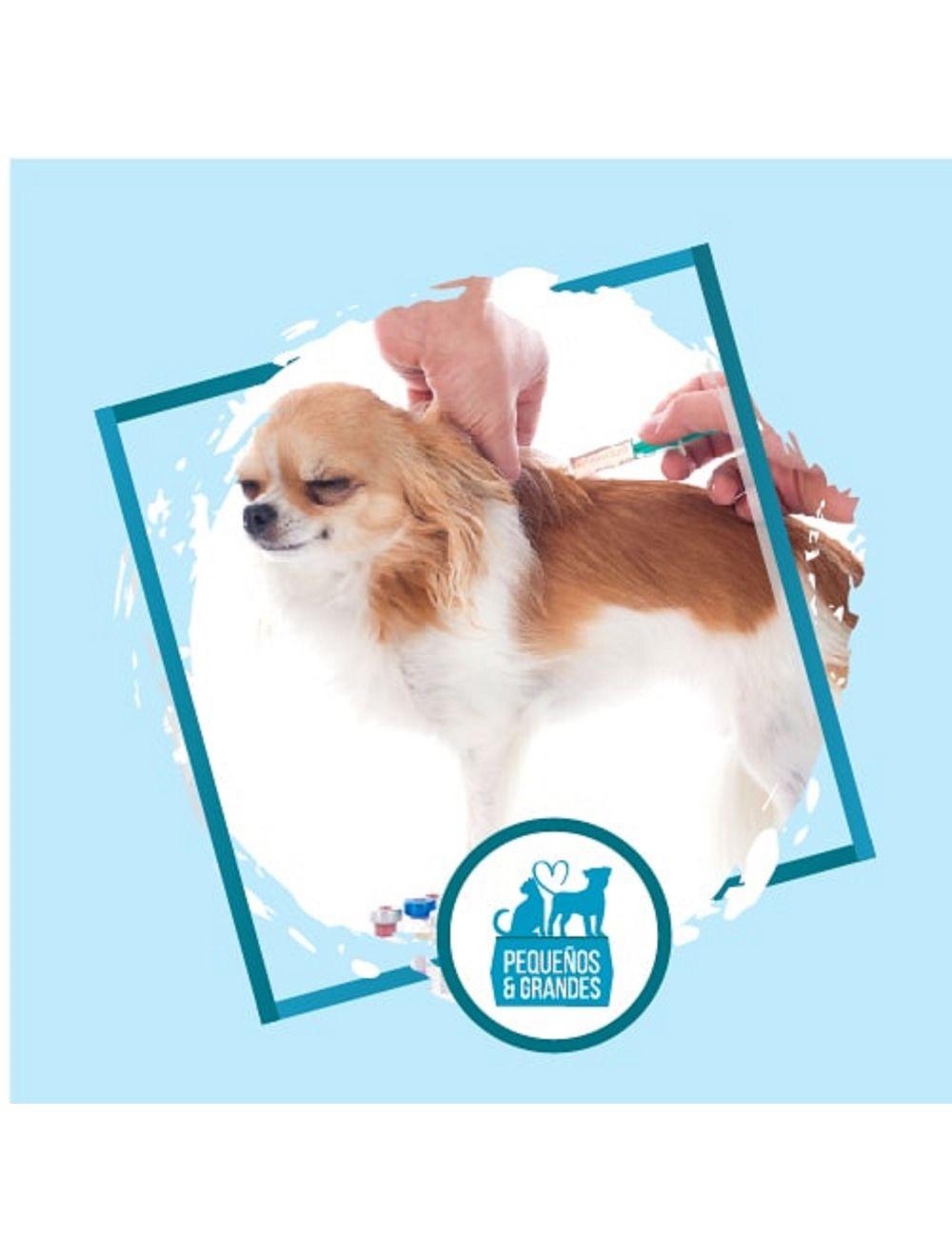 Vacunación a domicilio Perro - Pentavalente