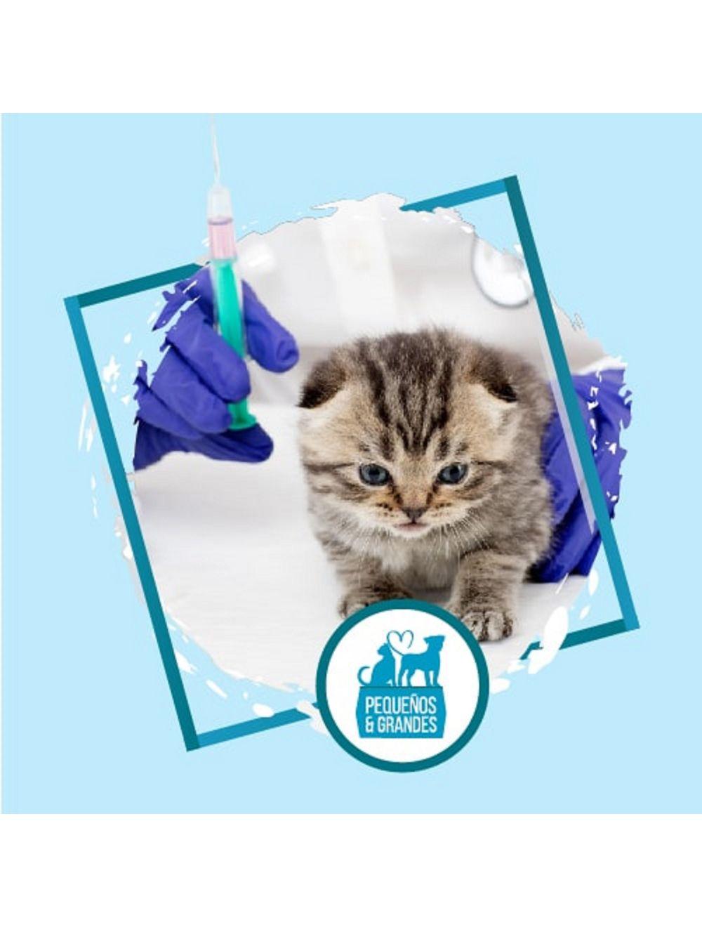 Vacunación a domicilio Gato-Primovacunación-Ciudaddemascotas.com