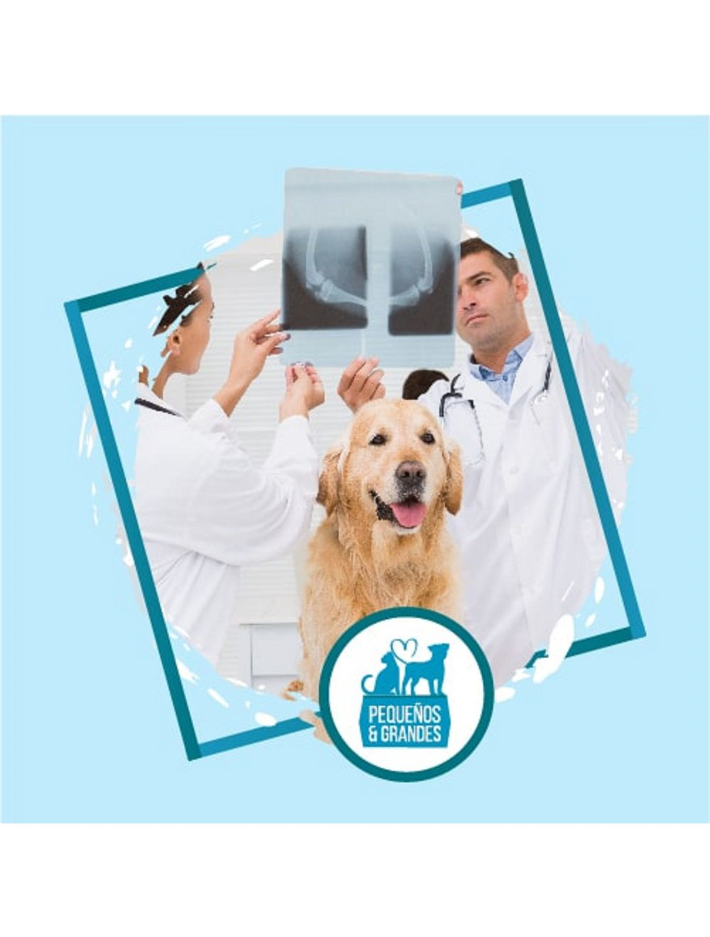 Radiografía a domicilio para Perros