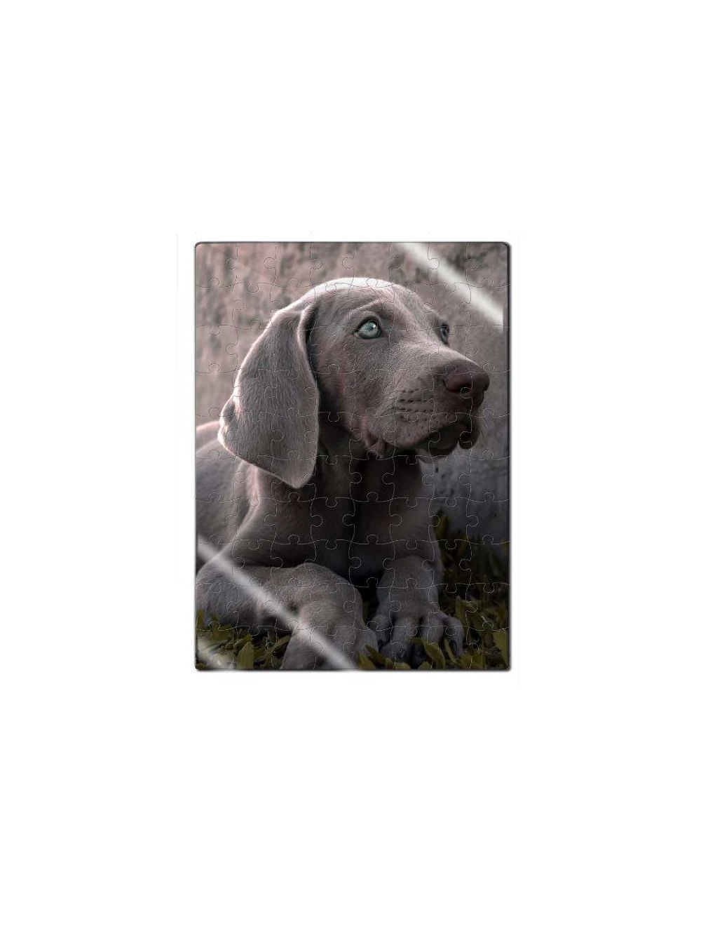 Rompecabezas Acrílico Cachorro Weimarener - Ciudaddemascotas.com