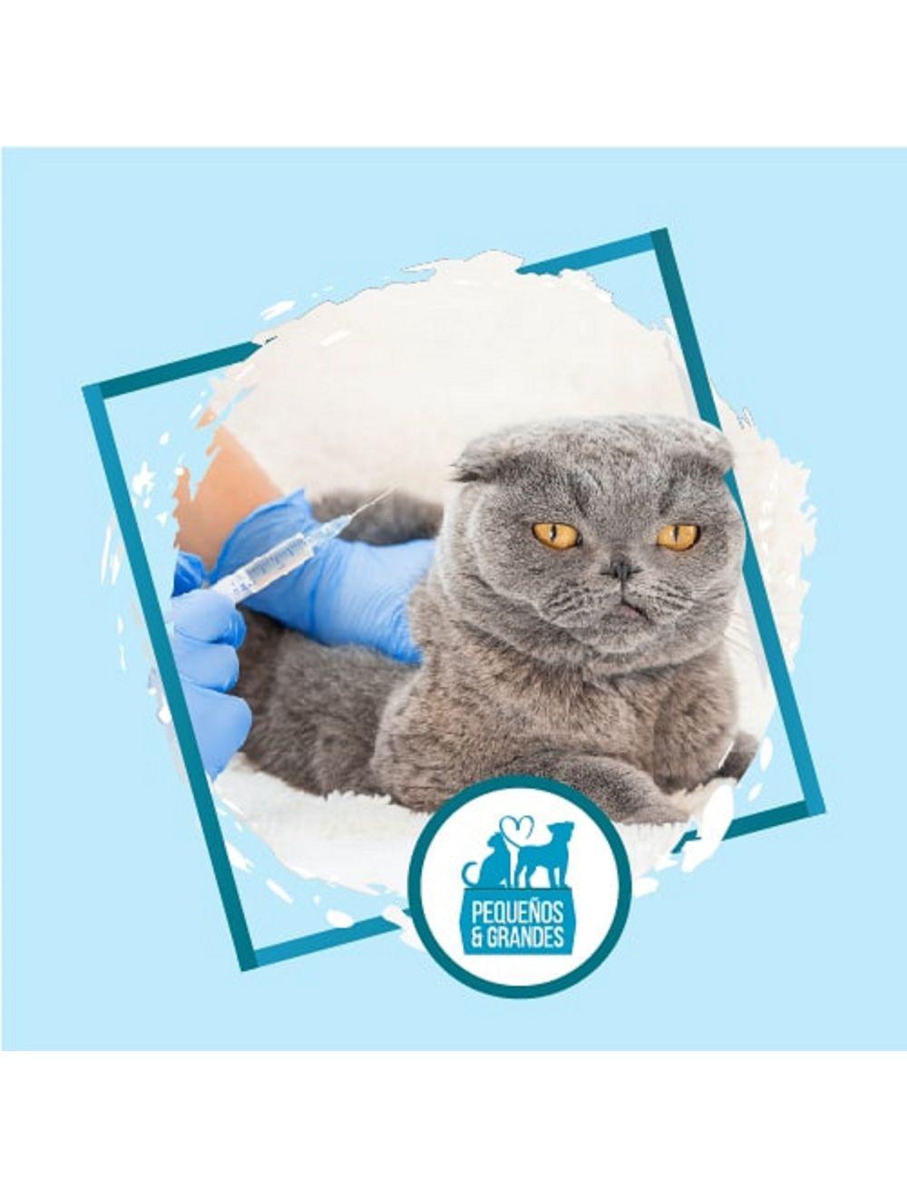 Vacunación a domicilio Gato - Refuerzo de Adultos - Ciudaddemascotas.com