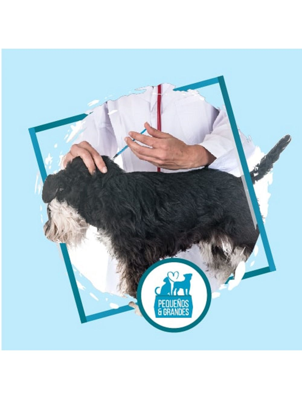 Vacunación a domicilio Perro - Rabia / Tos Perrera