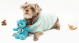 Hoodie Hunter para Perros Azul XS