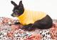 Saco Mandy para Perros Amarillo XS