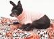 Saco Mandy para Perros Rosa XL