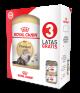 Royal Canin BHN persian adulto 2Kg+ 3 latas