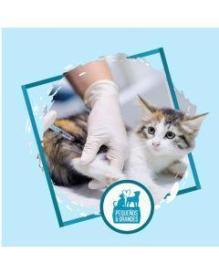 Vacunación a domicilio Gato - Triple Felina
