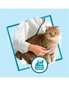 Consulta veterinaria a domicilio - Gato