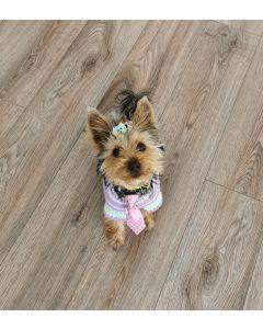 Corbata Ajustable para Mascota