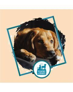 Guardería Canina Familiar Tipo Hotel–15 días 14 noches