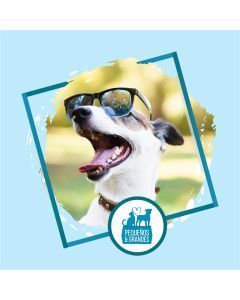 Guardería Canina Campestre Tipo Hotel–15 días 14 noches