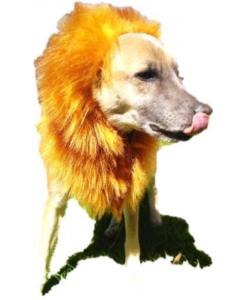 Melena de León para Perros Ajustable-Ciudaddemascotas.com