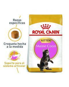Royal Canin FBN Maine Coon Kitten 4 Kg - Ciudaddemascotas.com