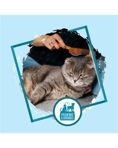 Niñera Felina - Sesión para 1 Gato