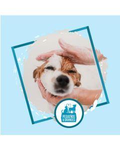 Peluquería profesional para perros a domicilio - Ciudaddemascotas
