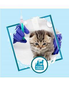 Vacunación a domicilio Gato - Primovacunación