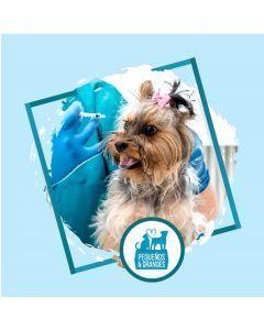 Vacunación a domicilio Perro - Primovacunación
