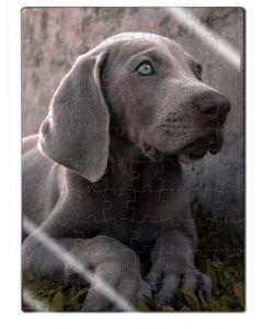 Rompecabezas Acrílico Cachorro Weimarener