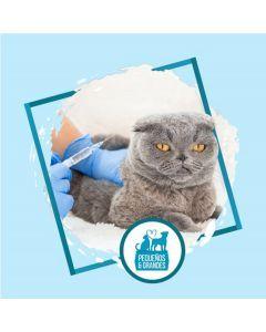 Vacunación a domicilio Gato - Refuerzo de Adultos