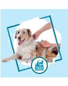 Vacunación a domicilio Perro - Refuerzo de Adultos