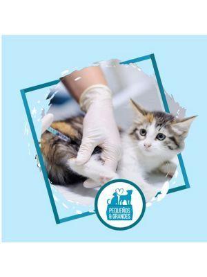 Vacunación para gatos a domicilio Triple Felina- Ciudaddemascotas