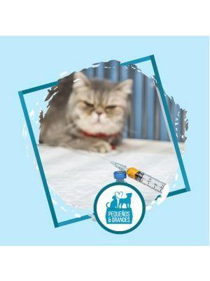 Vacunación Gato - Antirábica y leucémica-Ciudaddemascotas.com