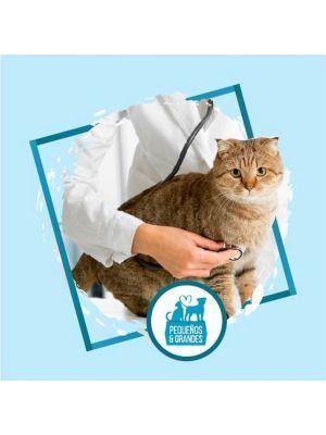 Consulta veterinaria a domicilio para Gato - Ciudaddemascotas.com