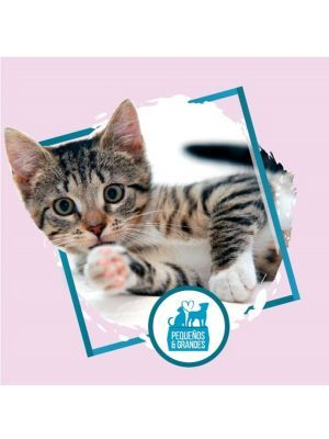 Esterilización a domicilio para hembra felinos- Ciudaddemascotas.