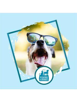 Guardería Canina Campestre 1 noche - Ciudaddemascotas.com