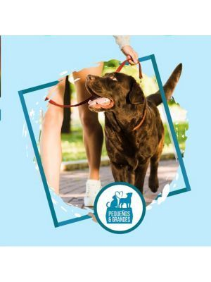 Guardería Canina Campestre Tipo Hotel–30 - Ciudaddemascotas.com