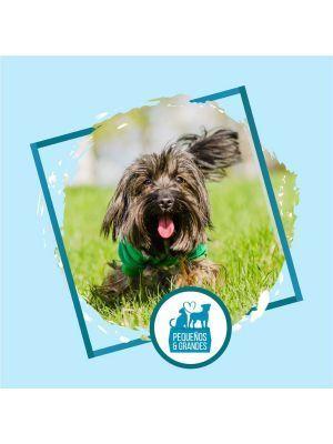 Guardería canina campestre Fin de Semana Bogotá-Ciudaddemascotas
