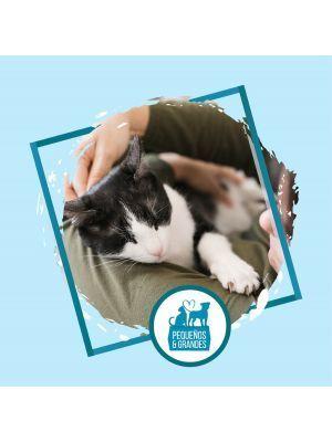 Niñera Felina - Sesión para dos gatos - Ciudaddemascotas