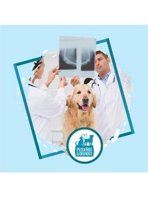 Radiografía a domicilio para Perros - Ciudaddemascotas.com