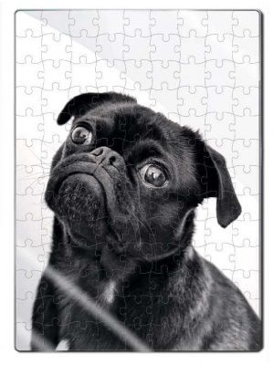 Rompecabezas Acrílico Pug Adulto